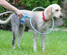 Now you can scrub your mucky pup clean in a quick and easy way using this awesome dog washer! It's 360 degree design allows water to get all around your pet's body as you wash them. Just attach it to your hose, add some soap and get washing! Fido will be shampooed and rinsed in as little as 1 minute. Also features adjustable water pressure to suit your pet's liking.