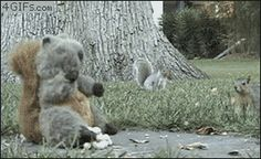 Squirrels vs. Stuffed Squirrel: The Epic Showdown from Look What I Found