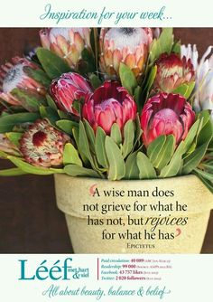 A wise man does not grieve for what he has not, but rejoices for what he has.