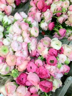 Pink peonies & ranunculus blooms. Love these because they offer a fuller look for arrangements and centerpieces.