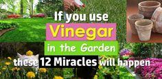 12 Amazing Vinegar Uses In Garden