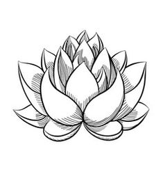 Flower Drawing Discover Hand drawn sketch of lotus flower. Lotus Tattoo Design, Flower Tattoo Designs, Flower Tattoos, Small Tattoos, Lotus Flower Art, White Lotus Flower, Lotus Flower Paintings, Lotus Flower Drawings, Lotus Flower Design