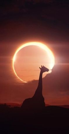 Eclipse seen in South Africa Beautiful World, Beautiful Places, Eclipse Lunar, Solar Eclipse, Silhouettes, Out Of Africa, Fauna, Africa Travel, Wonders Of The World