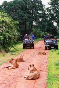 South Luangwa National Park, Zambia when we lived in Zambia