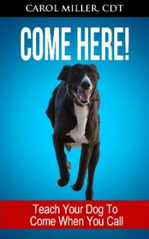 Kindle FREE Days:   Dec 12 – 13      ~~ COME HERE! Teach Your Dog To Come When You Call ~~ Do you want your dog to come when you call, every time? This six-week intensive program will help you get there!