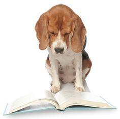 Beagles...