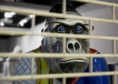 Norwich will be hosting painted Gorilla's this year after the elephants from Behind Bars, Elephants, Owl, Joker, Bird, Pictures, Painting, Fictional Characters, Animals