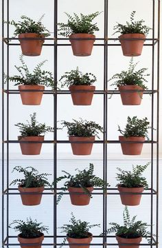 use plumbing pipes for shelving for your plants.