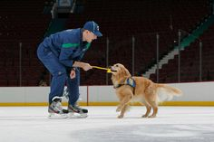 Montreal Canadiens: Dale Weise attempts to steal this dog's favourite yellow rope