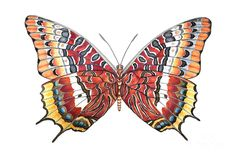 Charaxes Butterfly Painting by Lucy Arnold Butterfly Painting, Butterfly Watercolor, Butterfly Art, Butterflies, A Bug's Life, Butterfly Pattern, Painting Patterns, Teaching Art, Watercolor Paintings