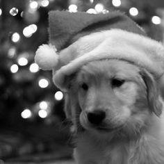 dog navideño