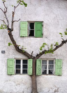 I love how the tree has grown up following the outline of the windows.  I bet when it full bloom it is charming.  Love the shutters, too.