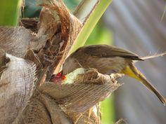 Bird Feeders, Yellow, Outdoor Decor, Teacup Bird Feeders
