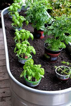 17 Best Container Ve ables Garden for Beginning