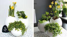 Gör egna krukor till påskens blommor – så här enkelt pysslar du ihop gipsägg av ballonger. Ett roligt påskpyssel för både stora och små! Cement, Diy For Kids, Easter, Interior, Plants, Home Decor, Gypsum, Dekoration, Indoor