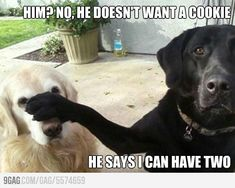 So my dogs.