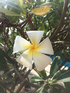 From my AirBnb - Elizabeth's garden