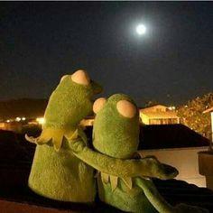 Frog Wallpaper, Cartoon Wallpaper, Cute Memes, Funny Memes, Sapo Kermit, Reaction Pictures, Funny Pictures, Les Muppets, Sapo Meme
