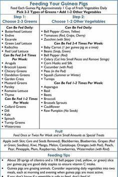 Daily Guinea Pig Care Checklist guinea pig Pinterest