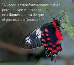 metamorfosis  www.facebook.com/joserubenhuergo.fanpage