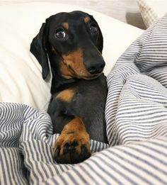 """""""Don't worry, I've saved a space for you to sleep right at the end of the bed... #bedthief"""""""