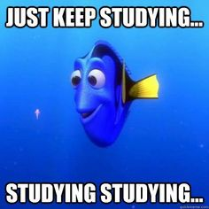 Just keep studying // follow us @motivation2study for daily inspiration #findingnemo