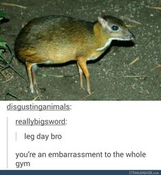 It's actually not muscular at all, it's just got a lot of fat, never seem a deer before? <--- still funny though