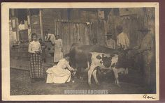 Phipps, Photo Group 1 - Ponce, Puerto Rico. Woman milking cow on a Ponce Street - Postcard mailed & canceled Feb 13, 1907.