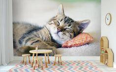 Śpiący kotek:  http://mural24.pl/konfiguracja-produktu/44115350/#homedecor #fototapeta #obraz #aranżacjawnętrz #wystrójwnętrz, #decor #desing