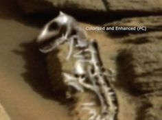 """+ - Fotos postadas online, que foram originalmente tiradas pela Nasa Mars Curiosity Rover, mostram uma formação rochosa no mínimo curiosa, em que ufólogos afirmam que poderiam ser os ossos fossilizados de um marciano pré-histórico que morreu há muito tempo. O canal do YouTube """"Paranormal Crucible"""" notou algo estranho na imagem da rover que foi …"""