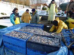 Rybacki połów spod lodu