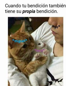 Read 248 from the story Imagenes Y Gifs Higuel by Blueberry-swap-jth (Bonnie Fundashi) with reads. Funny Animal Memes, Funny Cat Videos, Funny Animals, Cute Animals, Funny Memes, Funny Spanish Memes, Spanish Humor, Karen Memes, Twd Memes