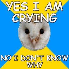 bipolar memes   memes > Bipolar Owl > yes i am crying no i don't know why