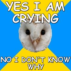 bipolar memes | memes > Bipolar Owl > yes i am crying no i don't know why