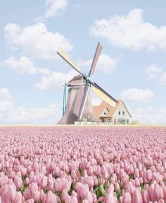 New Pictures Tulip fields Concepts Lengthy dwell the tulip ! Flores Wallpaper, Tulip Fields Netherlands, The Places Youll Go, Places To Go, Beautiful World, Beautiful Places, Belle Photo, Beautiful Landscapes, Places To Travel