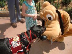 Pluto and Crosby Aug. 2011 Disney World    Www.facebook.com/tiaratravels