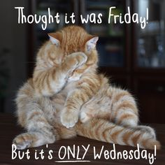 Happy Wednesday Pictures, Happy Wednesday Quotes, Wednesday Humor, Friday Humor, Friday Morning Quotes, Good Morning Wednesday, Good Morning Post, Inspirational Quotes With Images, Inspiring Quotes About Life