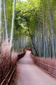 Bamboo Grove | Arashiyama | Kyoto | Japan | Photo By Shadie Chahine  Bambu é uma das coisas mais bonitas na natureza!