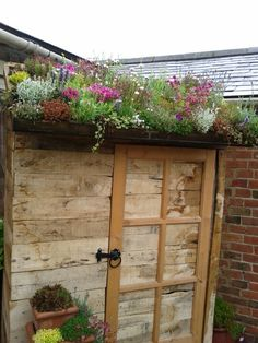 Shed roof garden