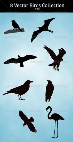 Realistic Graphic DOWNLOAD (.ai, .psd) :: http://sourcecodes.pro/pinterest-itmid-1000754309i.html ... Bird Silhouette Collection ...  birds, black, branch, collection, crow, eagle, eps, flamingo, flying, raven, seagull, silhouette, vector  ... Realistic Photo Graphic Print Obejct Business Web Elements Illustration Design Templates ... DOWNLOAD :: http://sourcecodes.pro/pinterest-itmid-1000754309i.html
