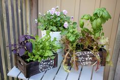 Salad Planters {Mother's Day Gift Idea}