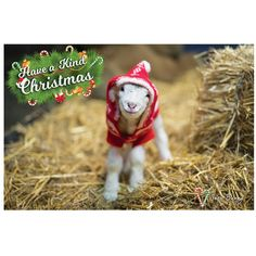Have a kind Christmas! Snow Bunny Christmas Cards 10 Pack – Edgar's Mission