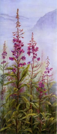 Margaret Walsh Best   American Society of Botanical Artists
