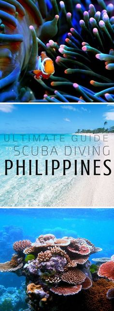 Scuba Diving Philippines: The Top 16 Locations – Travel Voyage Philippines, Philippines Travel, Palawan, Spain Travel, India Travel, Manila, Weather In India, Beach Trip, Beach Vacations