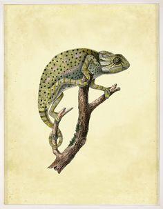 Lesson Reptiles 1