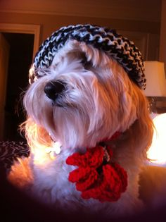 Doggie scarf Made by hand in the usa Portion of sale goes to no kill animal shelter