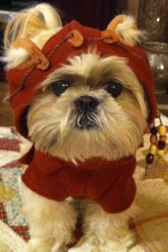 ❤️This is my Woodrow in his Halloween costume last year. He was an Ewok.