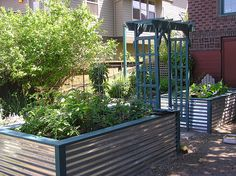 Corrugated metal raised beds.  north side yard with reflective corrugated metal on fence?  south side yard for tomatoes?