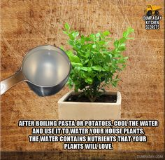 Save water pasta was cooked in. Use it on your plants. Cool, just looked it up and they say also water from cooking hard boiled eggs too. Think I would do this outside though, not indoors , just in case it decided to go funky on me. Organic Gardening, Gardening Tips, Good Morning Funny Pictures, Morning Pics, Saturday Morning Quotes, Afternoon Quotes, Kitchen Games, Kitchen Tips, Dump A Day