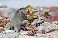 Ochtendexcursie naar Plaza Sur - Galapagos Eilanden